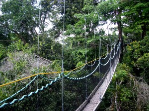 The Iwokrama Canopy Walkway, Iwokrama reserve, North Rupununi, Guyana