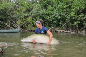 Holding onto a radio-tagged arapaima