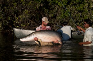 Oliver White of Costa had to use both arms to catch this 200-pound arapaima that had a girth of about 41 inches