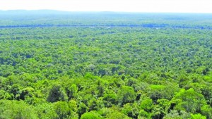Guyana has kept 99.5 percent of its forests healthy