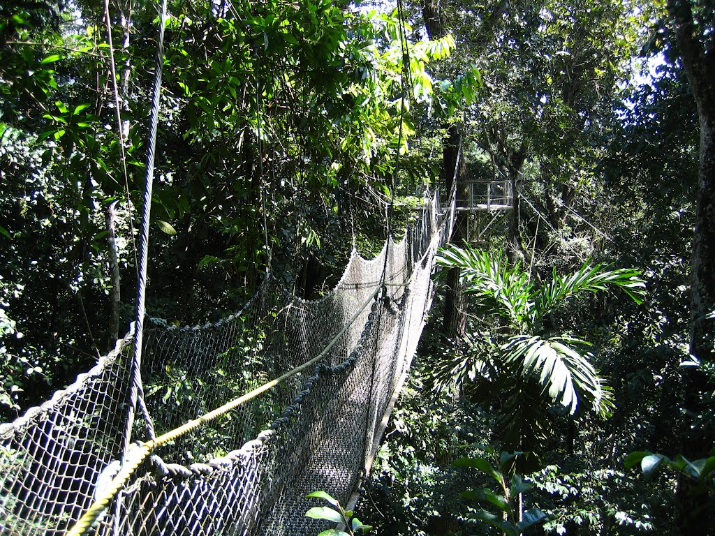 05 & Experience the airy heights of the Iwokrama Canopy Walkway