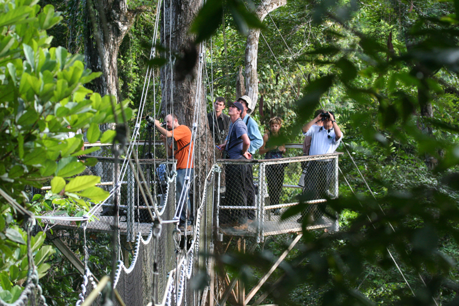 Tourists look at birds and other wildlife from one of the platforms & Experience the airy heights of the Iwokrama Canopy Walkway